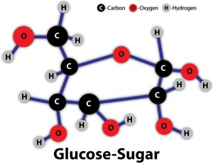 sugar carbohydrate